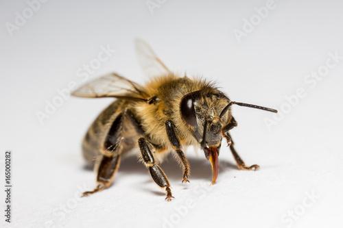 In de dag Bee Bee macro close up