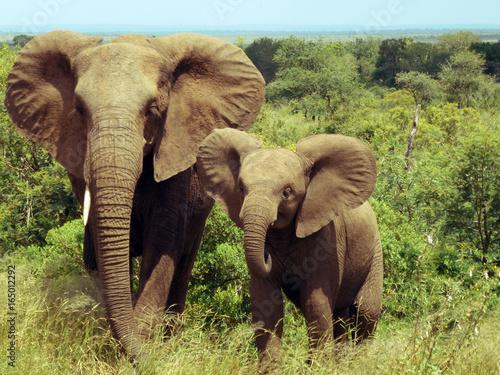 elefantenmama-mit-kind