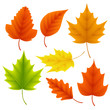 Fall leaves vector set for autumn season and seasonal elements with maple and oak leaf in different colors isolated in white background. Vector illustration.