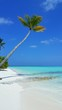 P00619 Maldives beautiful white sandy beach background with palm trees on sunny tropical paradise island with aqua blue sky sea water ocean 4k