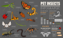 Pet Insects Breeds Icon Set Fl...