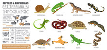 Pet Reptiles And Amphibians Icon Set Flat Style Isolated On White. House Keeping This Animals Collection. Create Own Infographic About Pets