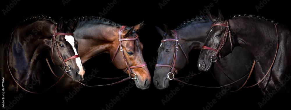 Fototapeta Horses portrait in bridle on black background. Banner for website