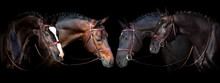 Horses Portrait In Bridle On B...