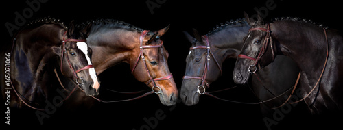 Horses portrait in bridle on black background. Banner for website