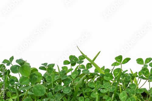 green clover frame at the bottom isolated on white background and copy space for your text