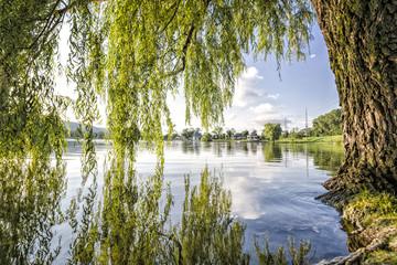 FototapetaSunset, tree and lake