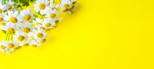 Chamomile Flowers On Yellow Ba...