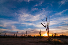 Desert Sunset With Cactus And ...