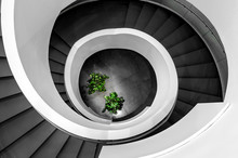 Spiral Staircase With Trees