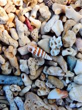 Pile Of Seashells, Vertical Ba...