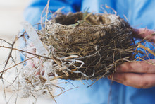 The Side Of An Empty Bird Nest Made By Barn Sparrows