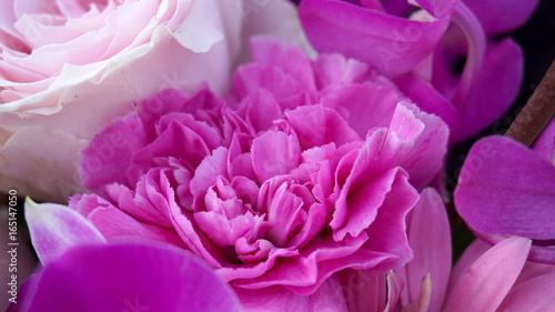 Foto op Plexiglas Dahlia ピンクの花たち