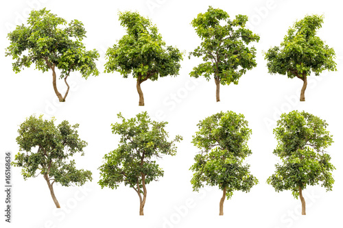 Collection Of Green Tree Isolated On White Background, Tropical Trees Isolated U Tablou Canvas