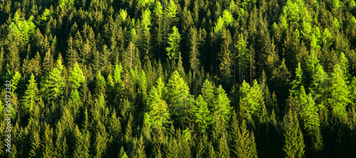 Papiers peints Forets Green forest trees texture background. Nature landscape