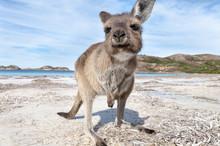KANGAROO BEACH AUSTRALIA