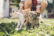 Boy Playing With Kittens
