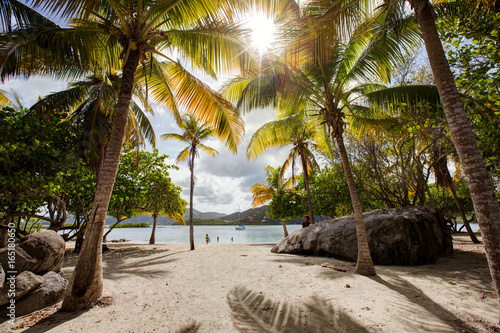 Tropical green palm trees on a white sandy beach in the Caribbean