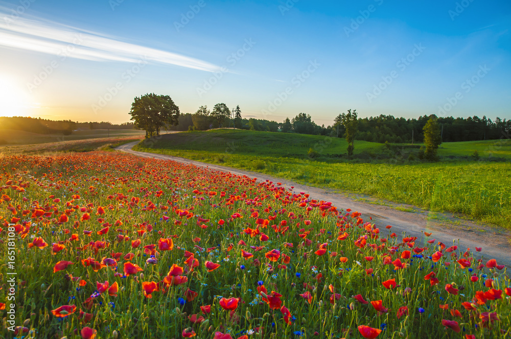 Red Wild poppies in the meadow at sunset, amazing background photo. To jest Polska – Mazury