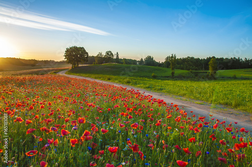 Photo  Red Wild poppies in the meadow at sunset, amazing background photo