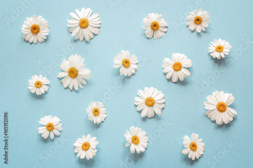 In de dag Madeliefjes Floral camomile pattern on a blue background.