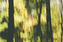 Abstract Of Forest In Autumn