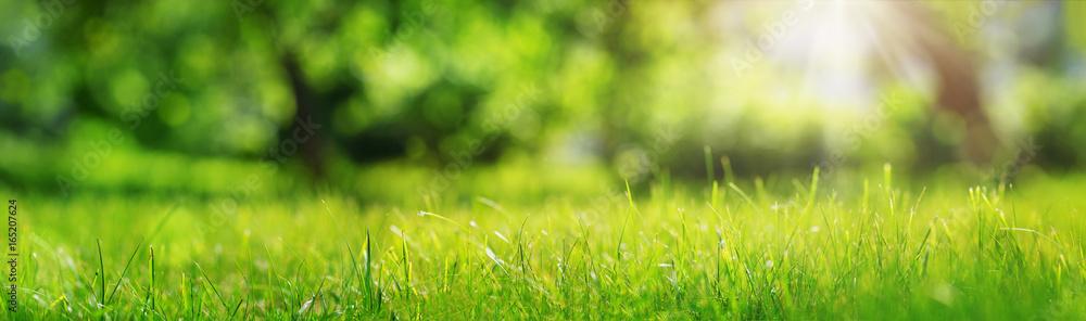 Fototapety, obrazy: Fresh green grass background in sunny summer day