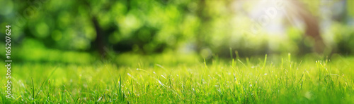 Poster de jardin Herbe Fresh green grass background in sunny summer day