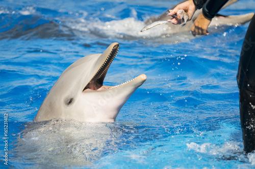 In de dag Dolfijn Delfín
