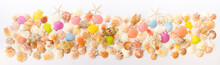 Composition Of Exotic Sea Shells On A White Background. The View From The Top. Place For Your Text.