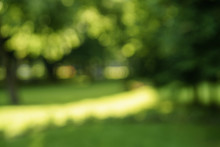 Abstract Blurred Background Of Trees In Park In Sunny Summer Day