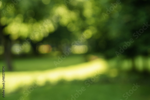 Obraz abstract blurred background of trees in park in sunny summer day - fototapety do salonu
