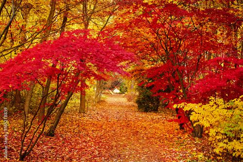 Ingelijste posters Rood traf. Autumn park leaf background