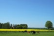 landschaft im münsterland