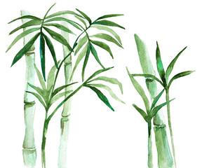 Watercolor bamboo illustration
