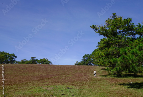 Poster Diepbruine Landscape with grass hill in Dalat, Vietnam