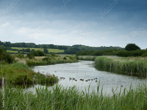 Staande foto Blauwe jeans an english river scene landscape lake with ducks and a sheep grazing