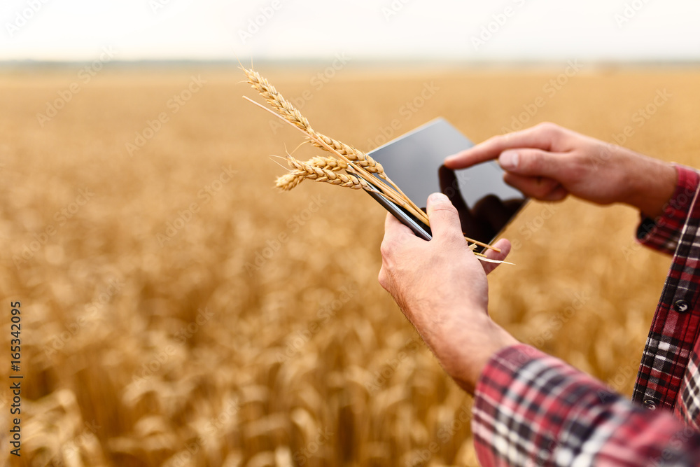 Fototapeta Smart farming using modern technologies in agriculture. Man agronomist farmer with digital tablet computer in wheat field using apps and internet, selective focus