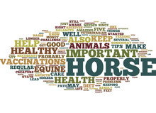 EQUINE HEALTH FIVE TIPS FOR A ...