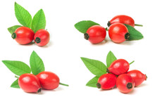 Rose Hip Berry With Leaf Isola...