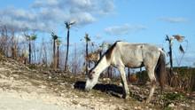 Skinny Horse Eating