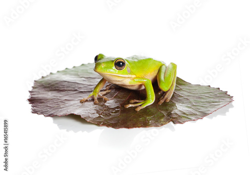 Tuinposter Kikker Isolated frog on leaf
