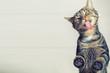 canvas print picture - Lustiges, niedliches Kätzchen