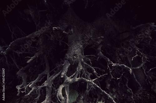 Carta da parati  dark tree roots forest detail background