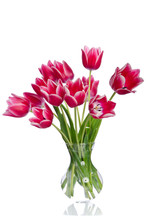 Bouquet Of Beautiful Pink Tulips In Transparent Vase Isolated On White Background