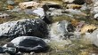 Mountain stream with clean water.