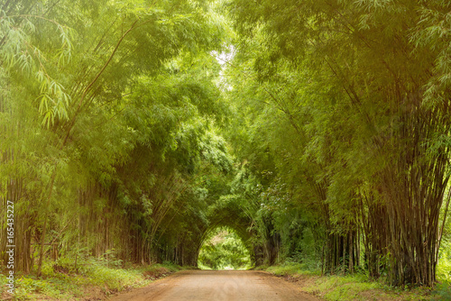 Plakaty do przedpokoju  tunnel-bamboo-trees-and-walkway