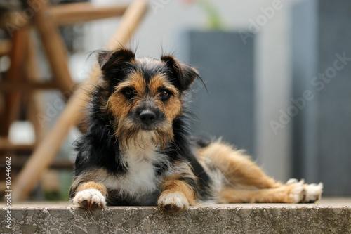 Leinwand Poster Terrier Mischling