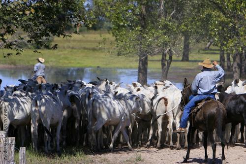 Poster de jardin Vache Fazenda de gado