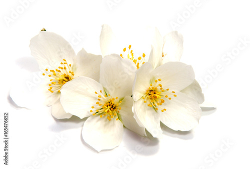 Jasmine flower isolated on white background. close up Wallpaper Mural